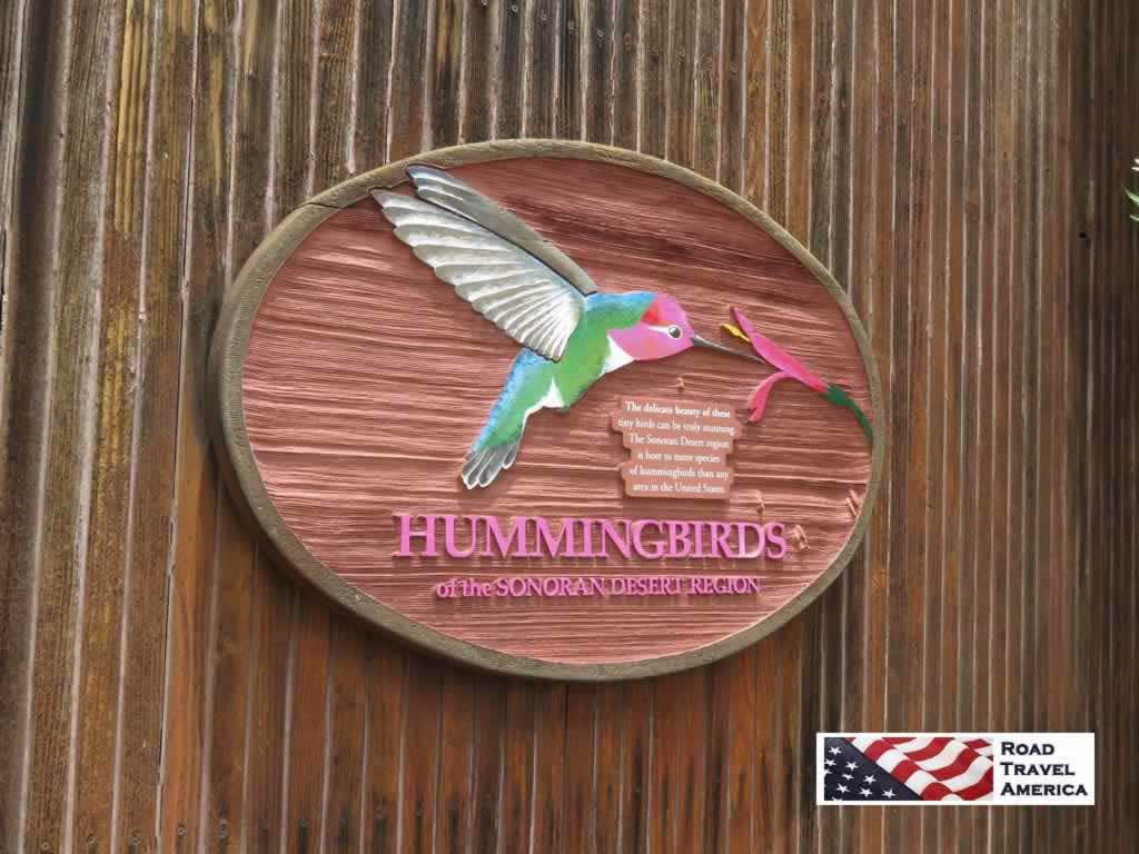 Experience hummingbirds up close and personal at the Arizona-Sonora Desert Museum
