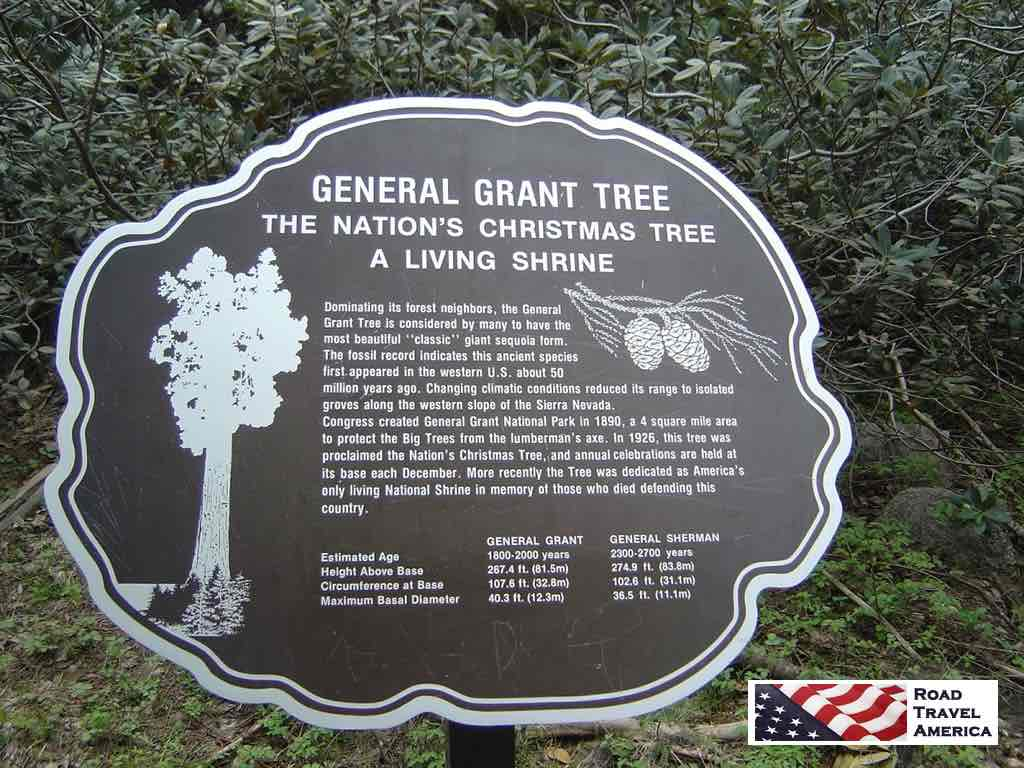 General Grant Tree ... The Nation's Christmas Tree ... A Living Shrine