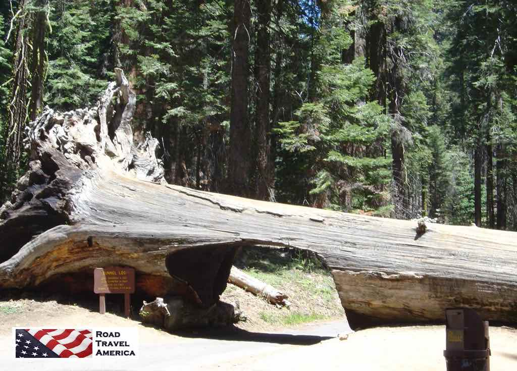 The famous Tunnel Log in Sequoia National Park