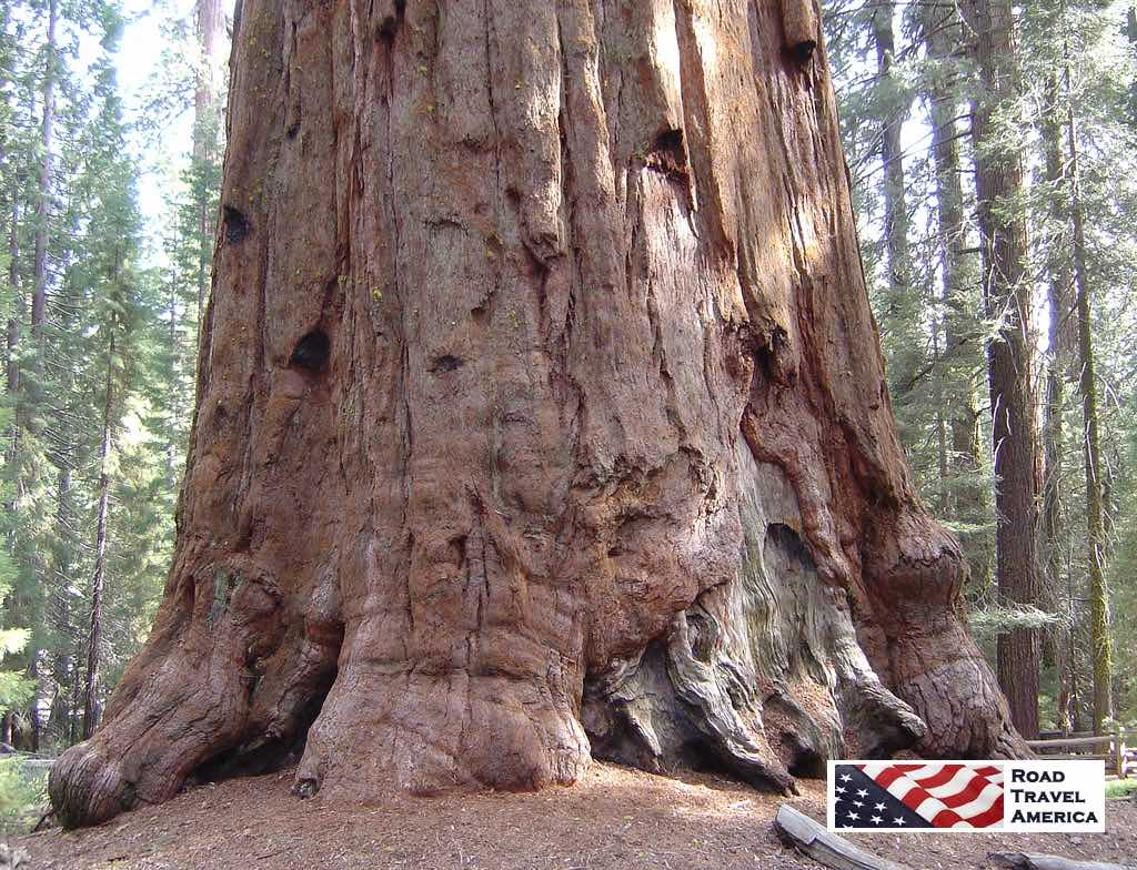 What this National Park is all about ... the giant Sequoia trees!