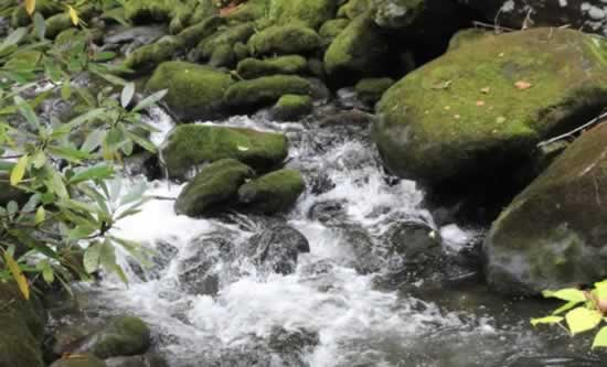 Rushing waters in Great Smoky Mountains National Park
