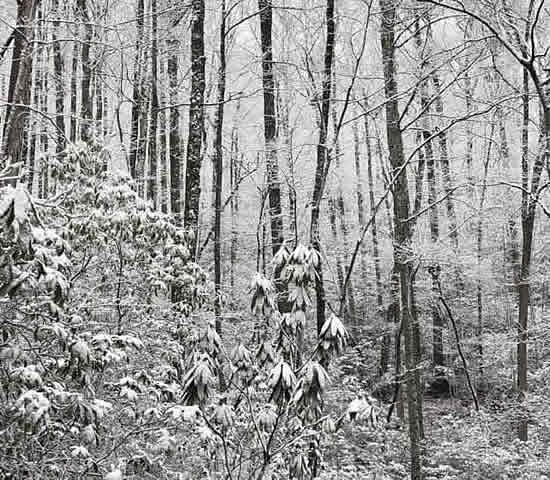 Snow-covered forest in the deep of winter in Great Smoky Mountains National Park