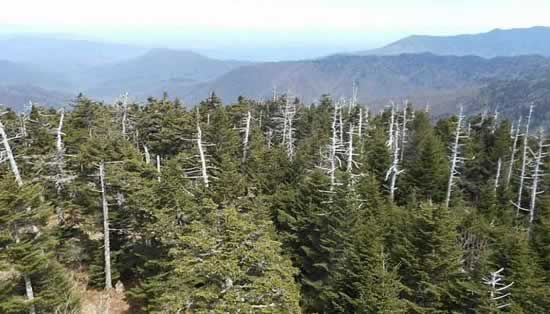 View from the Clingmans Dome tower