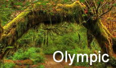 Olympic National Park travel, directions, maps, lodging and things to do