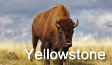 Yellowstone National Park travel, directions, maps, lodging and things to do