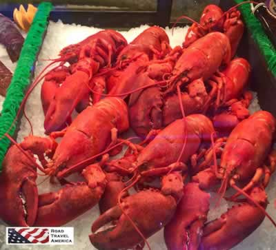 Maine Lobsters ... a great reason to travel to Bar Harbor!