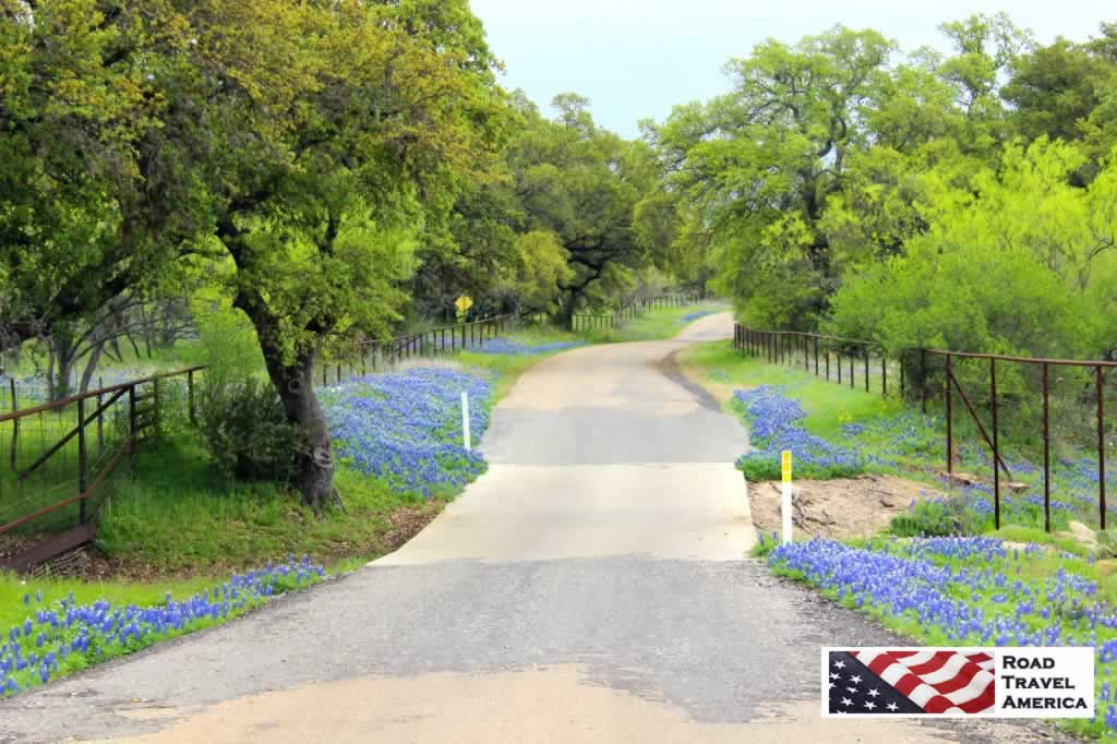 A profusion of Bluebonnets along the Willow City Loop near Fredericksburg, Texas in the spring