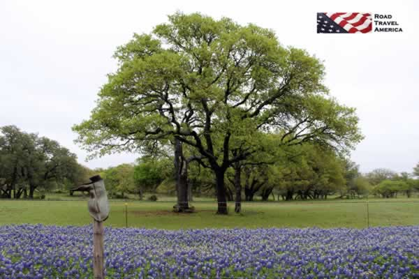 Springtime on the Willow City Loop near Fredericksburg ... Bluebonnets and Boots!